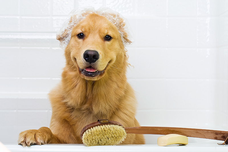 Happy Dog in the Bath Tub wearing a shower cap